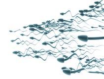 Pilhas de esperma Imagem de Stock