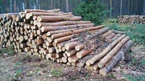 Pilhas de madeira Foto de Stock Royalty Free