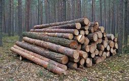 Pilhas de madeira Foto de Stock
