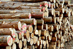 Pilhas de madeira Imagens de Stock Royalty Free
