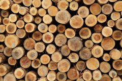 Pilhas de madeira nas docas Imagens de Stock