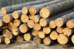 Pilhas de registros spruce Fotos de Stock