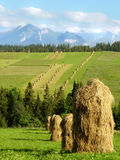 Pilhas do amanhecer chanfrado do feno na montanha polonesa Foto de Stock Royalty Free