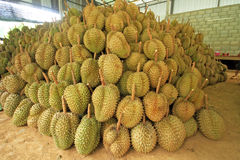 Pilhas do Durian Imagens de Stock