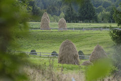 Pilhas do feno em campos verdes Fotografia de Stock
