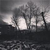 PILHAS do tiro preto e branco da LENHA de uma pilha dos logs Imagem de Stock Royalty Free