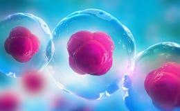 Pilhas humanas sob um microsc?pio Pesquisa das c?lulas estaminais Terapia celular ilustração stock