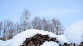 Pilhas nevado da lenha, céu ensolarado azul e floresta da árvore de vidoeiro filtrando certo video estoque