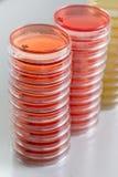 Pilhas vermelhas e amarelas dos pratos de petri no laboratório da microbiologia no fundo do laboratório do bacteriologia Imagens de Stock Royalty Free
