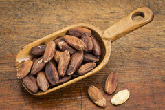Pili nuts in rustic scoop Royalty Free Stock Photography