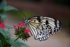 Pili Palas Butterfly Farm Stock Photography