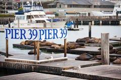 Pilier 39 à San Francisco Image libre de droits