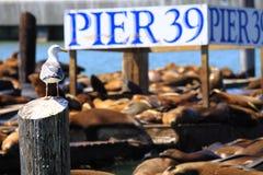 Pilier 39, San Francisco Image libre de droits