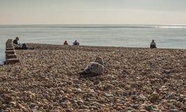 Pilier d'Eastbourne, East Sussex, Angleterre - un jour ensoleillé sur une plage/mouettes photo stock