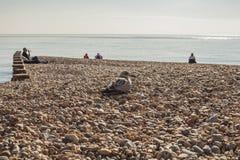 Pilier d'Eastbourne, East Sussex, Angleterre - un jour lumineux et ensoleillé sur une plage/mouettes images libres de droits