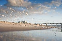 Pilier Seagulss de plage de Hermosa Photographie stock