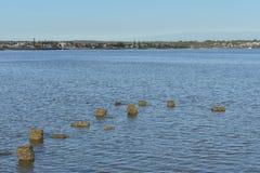 Piliers de marée haute Photographie stock