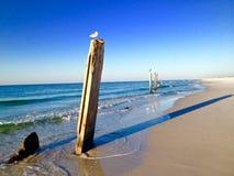 Piliers impairs sur une plage, avec des oiseaux se reposant sur eux Images stock