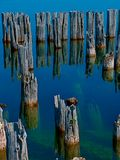 Piling Reflection. Reflection of weathered dock pilings from a deserted industrial complex on Lake Michigan Royalty Free Stock Photo