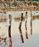 Piling Reflections: Lake Coogee, Western Australia Stock Images