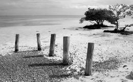 Pilings on the beach Stock Images