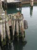 Pilings at the Dock Stock Image