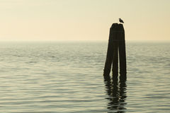 Pilings in the lagoon Stock Photos