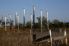 Pilings in marsh Stock Image