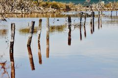 Pilings in Perspective: Lake Coogee, Western Australia Stock Photography