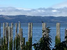 Pilings Royalty Free Stock Photo