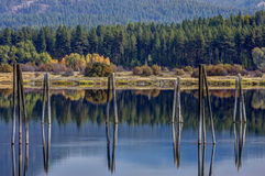 Pilings in the river. Stock Photos