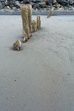 Pilings in Sand Stock Photos