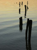 Pilings at sunset royalty free stock image