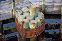 Pilings. Wood pilings wrapped in steel by the dock with barnacles attached Royalty Free Stock Photos