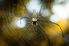 Pilipes dourados gigantes de Nephila do Web spider de esfera Imagem de Stock Royalty Free