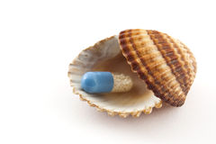 Pill in sea shell. As symbol of pharmacy and medicine Stock Photography