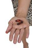 pill som tar kvinnan arkivbilder