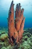 Pillar coral Royalty Free Stock Image
