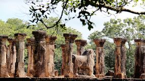 Pillar historic buddhism temple bodhi tree Royalty Free Stock Image