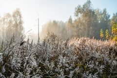 Pillar of the power line in the thickets of reeds. At dawn royalty free stock images