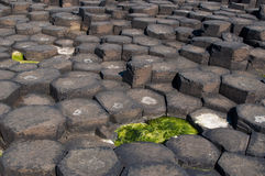 Pillars of the Giant's Causeway. On the north-east coast of Northern Ireland Stock Image