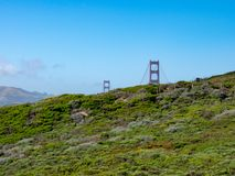 Pillars of Golden Gate bridge peeking up from the nature of the royalty free stock images
