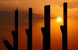 Pillars at sunset Stock Images