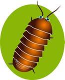 Pillbug illustration stock