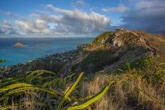 Pillerask som fotvandrar slingan Kailua Hawaii Arkivfoton