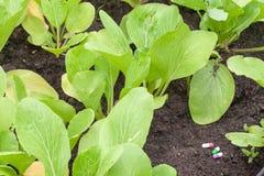 Pillola su sporcizia e sulla pianta all'azienda agricola immagine stock libera da diritti