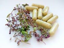 Pillole della medicina di erbe con le erbe naturali asciutte su fondo bianco Concetto di medicina di erbe e degli integratori ali fotografia stock
