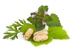 Pillole di erbe di supplemento e della vitamina con le erbe Fotografia Stock Libera da Diritti