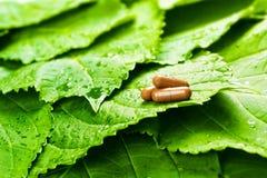 Pillole sopra i fogli verdi Fotografie Stock