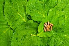 Pills över gröna leaves. Homeopathic medicin Royaltyfria Bilder